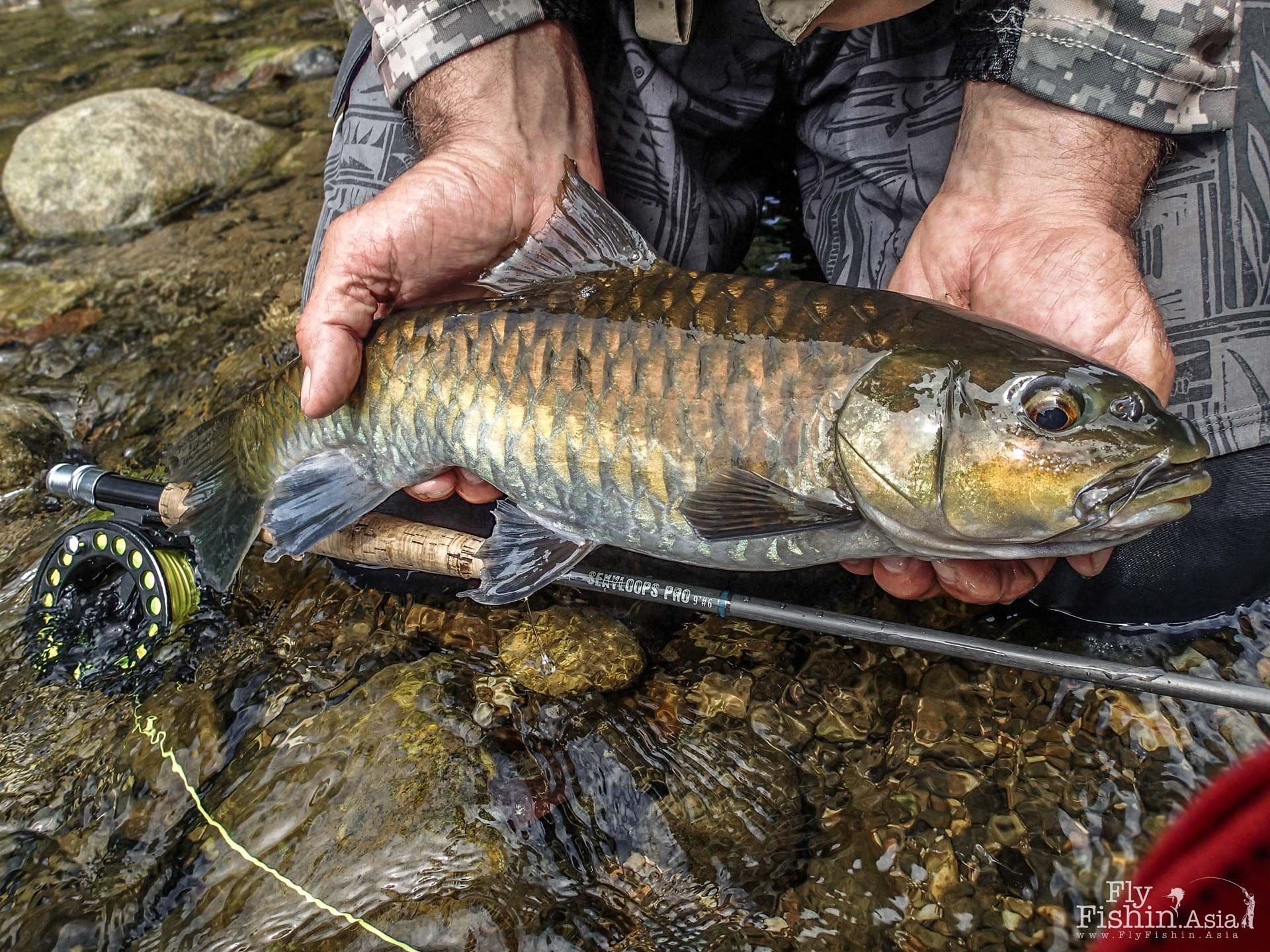 A nice mahseer taken from skinny water