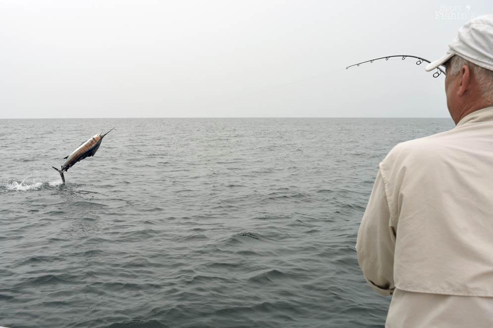 David with airborne sailfish