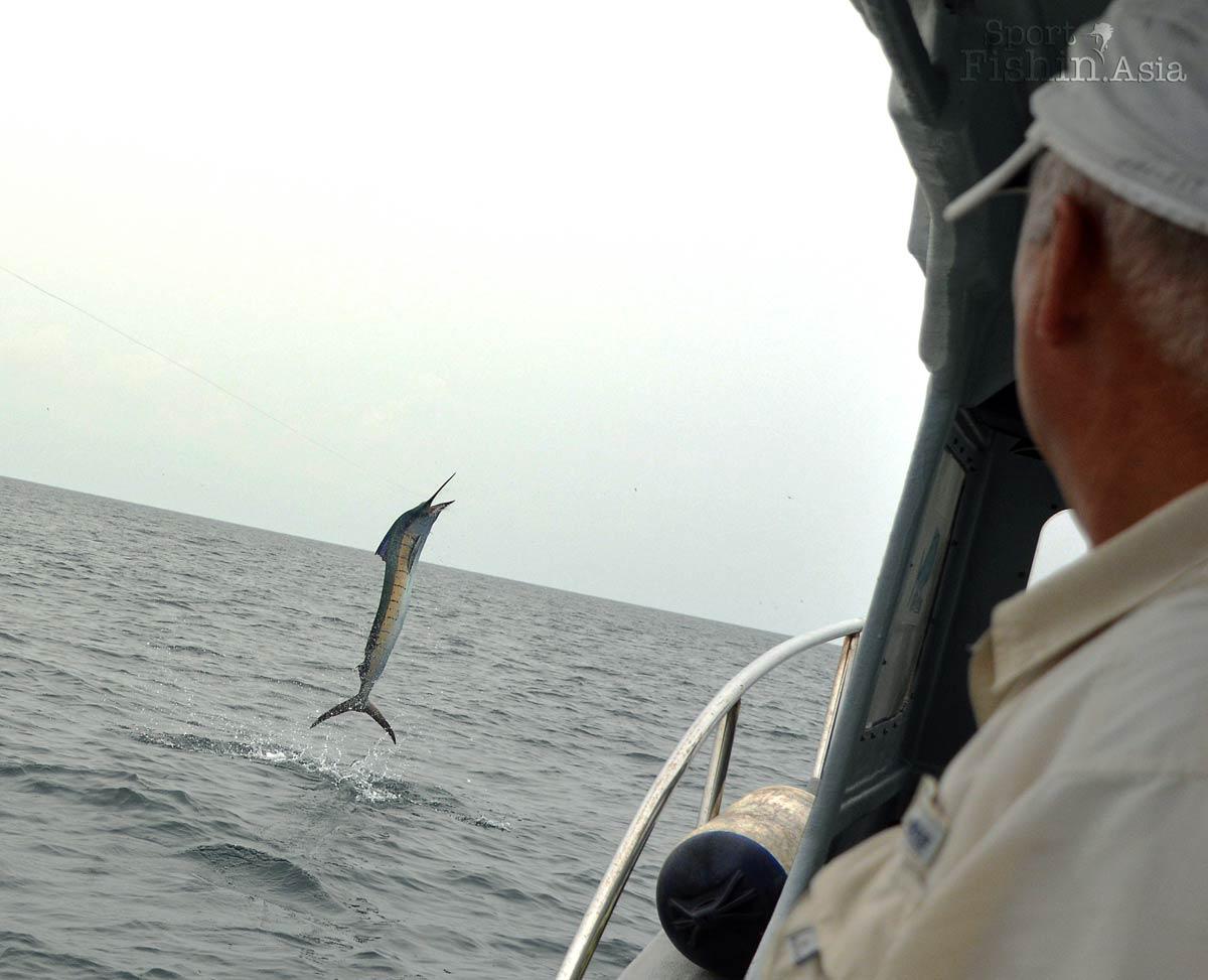 Sailfish jumps as David looks on
