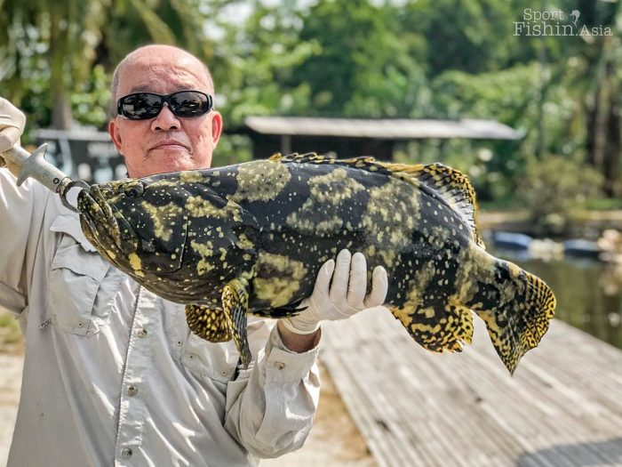Yap with a brightly marked grouper