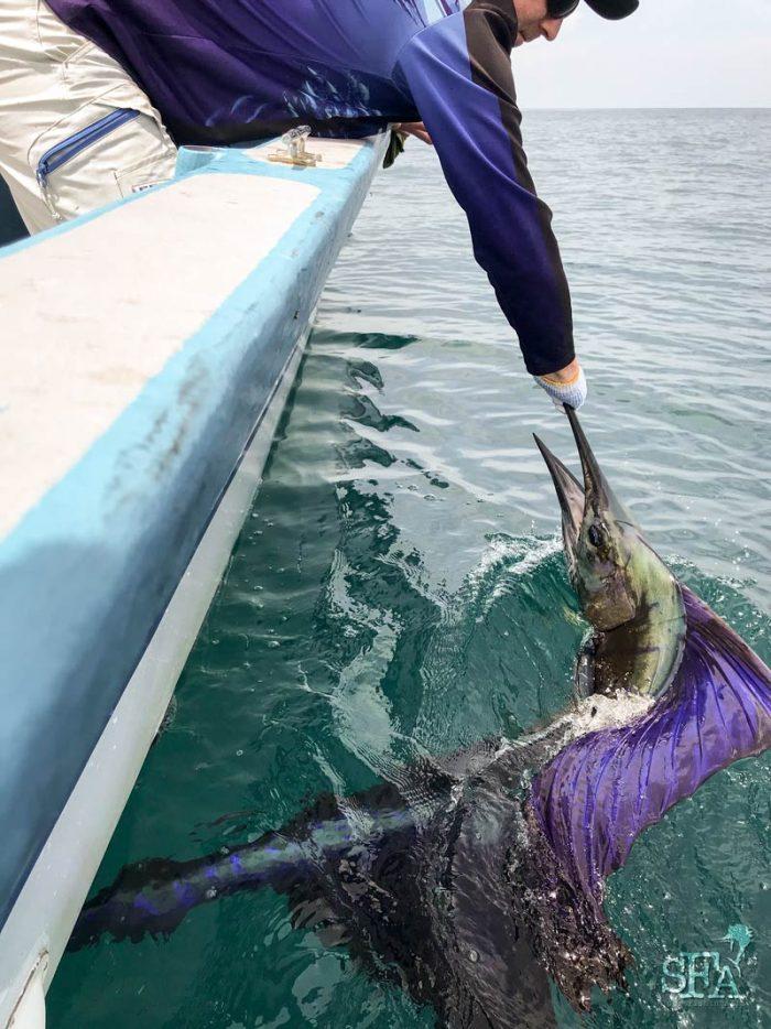 Barry holding a lit up sailfish