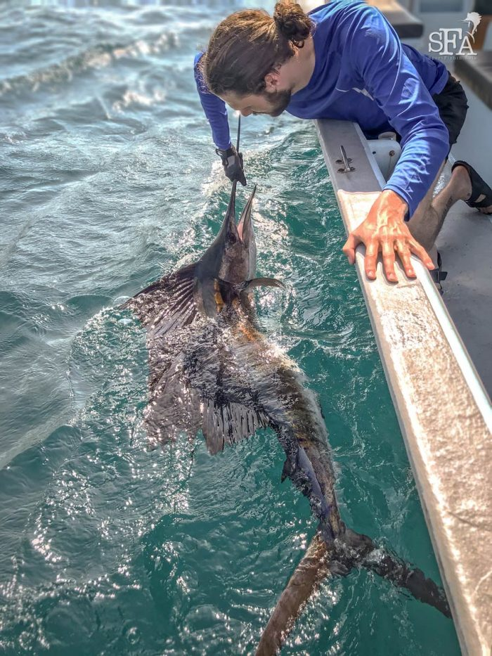Some boat side photos of Tor with another sailfish