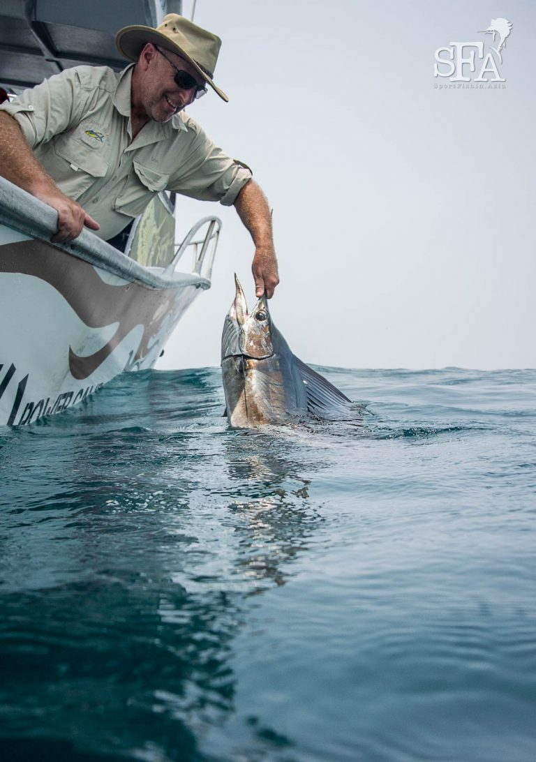 Dave keeping his first Rompin sailfish in the water for a quick photo