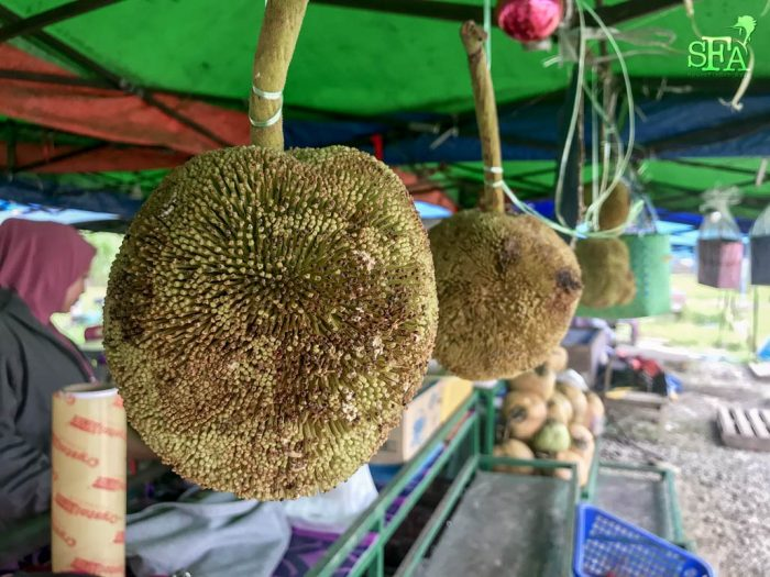 Buah Tarap (literally fruitfully fruit) are unique to Borneo