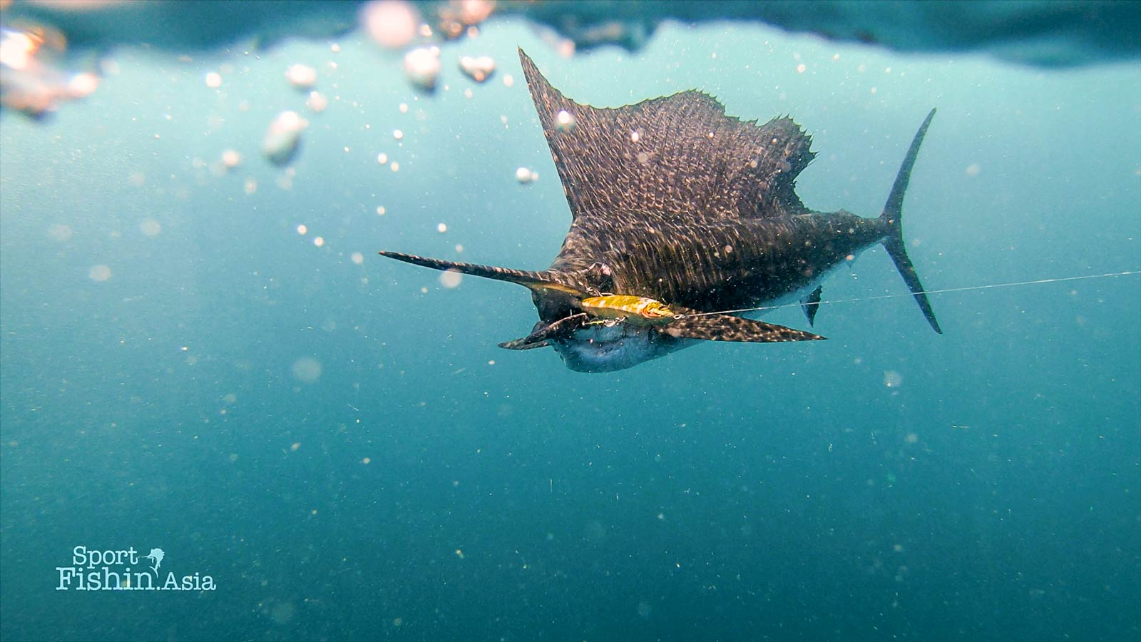 Ken's favourite shot! His Megabass swimsuit lure in the mouth of a Rompin sailfish.