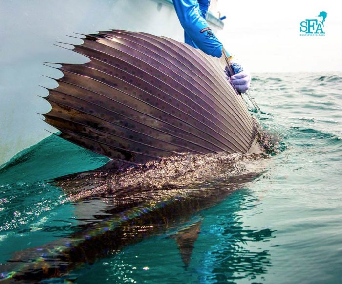 The dorsal fin of sailfish is scattered with many small, round black dots.