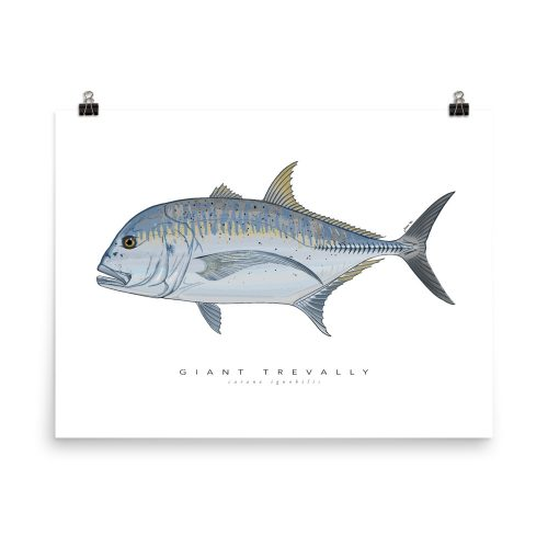 giant trevally art poster 18x24in