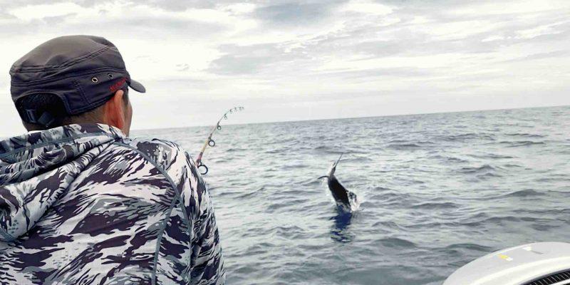Rompin sailfish fishing action