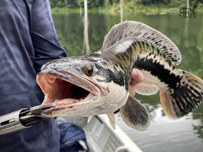 A nice fish with beautiful markings