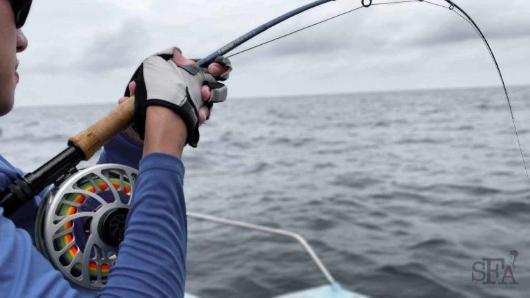 Nautilus silver king sage motive sailfish